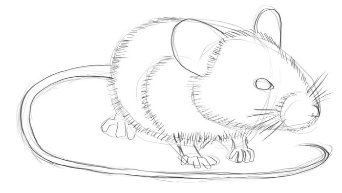 Line Drawing Rat : Mouse pencil drawing at getdrawings.com free for personal use