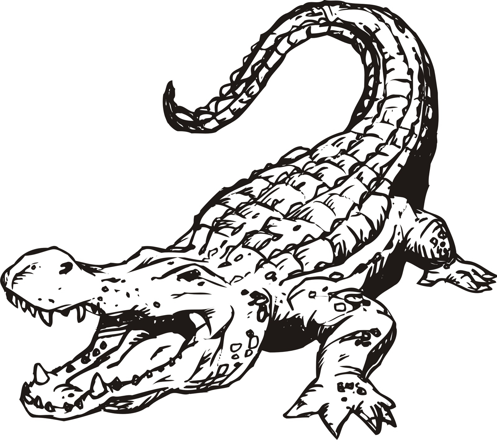 1600x1418 How To Draw An Alligator With Its Mouth Open