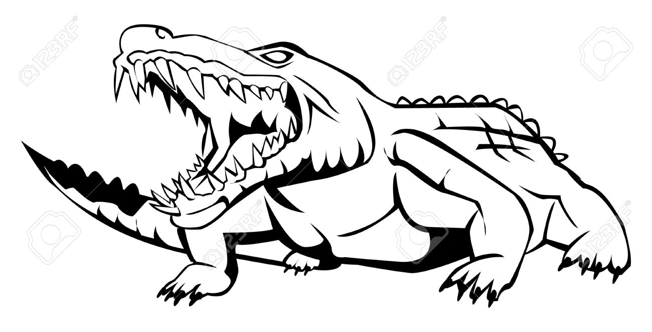 1300x662 How To Draw An Alligator With Its Mouth Open Alligator Aggression