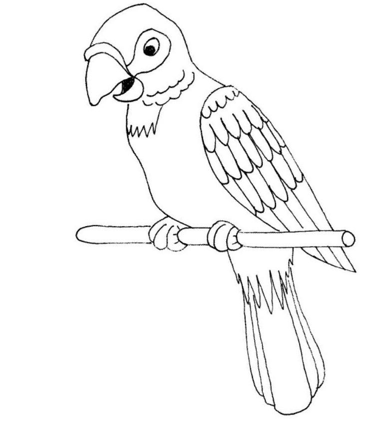 733x859 Parrots Open Mouth Parrots