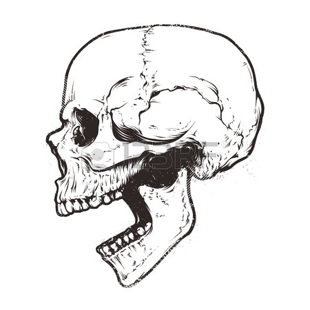 450x450 Anatomic Skull Vector Art. Detailed Hand Drawn Illustration