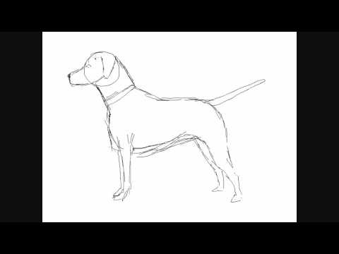 480x360 How To Draw A Dog Breed Dalmatian