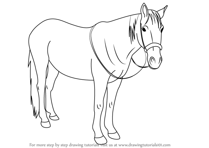 800x566 Learn How To Draw Standing Horse (Horses) Step By Step Drawing