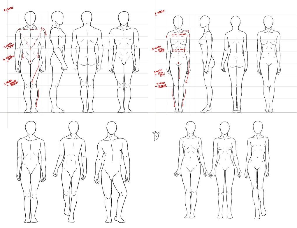 1019x784 Anatomy