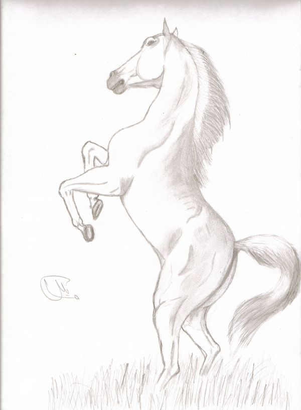 600x815 Standing Up Horse
