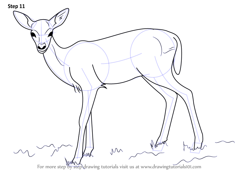 844x598 Learn How To Draw A Baby Deer Aka Fawn (Zoo Animals) Step By Step