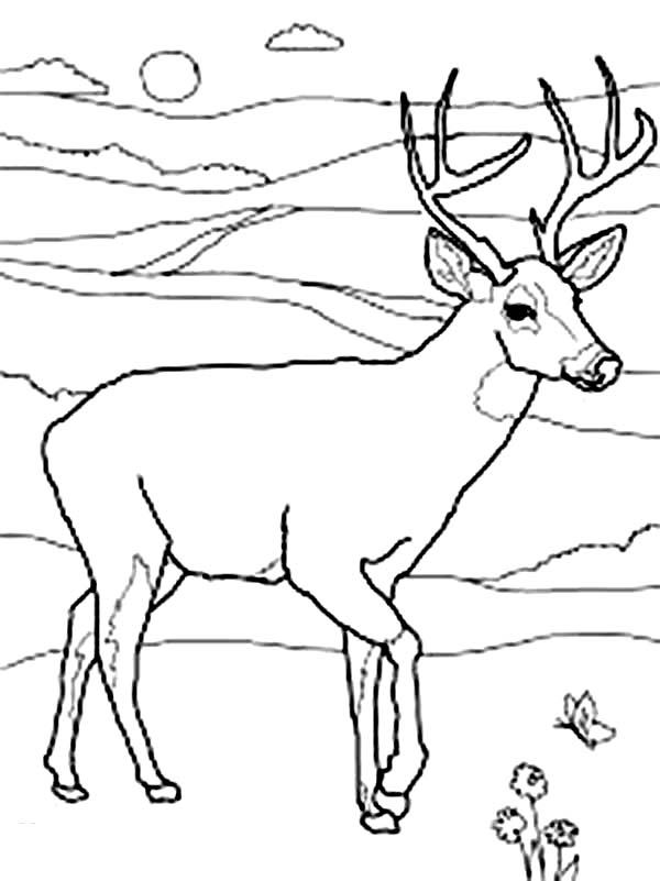 600x801 North America Mule Deer Coloring Page Coloring Sun