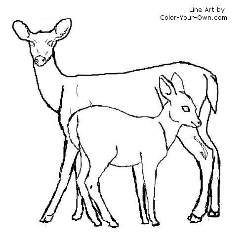 500x500 Coloring Pages Draw A Deer Mule Deer Buck Page Free Printable