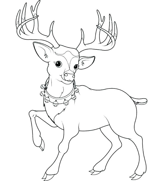 618x685 Deer Head Coloring Pages Plus Deer Coloring Picture Deer Coloring