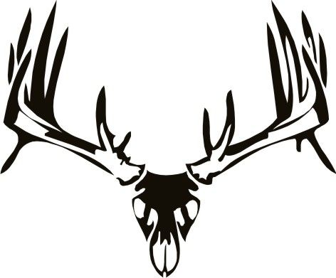 Mule Deer Skull Drawing