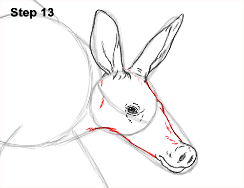 500x386 How To Draw An Aardvark