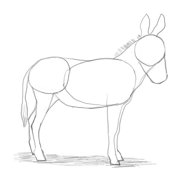 600x600 How To Draw A Donkey
