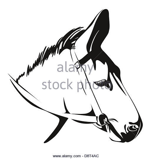 520x540 Mule Head Cut Out Stock Images Amp Pictures