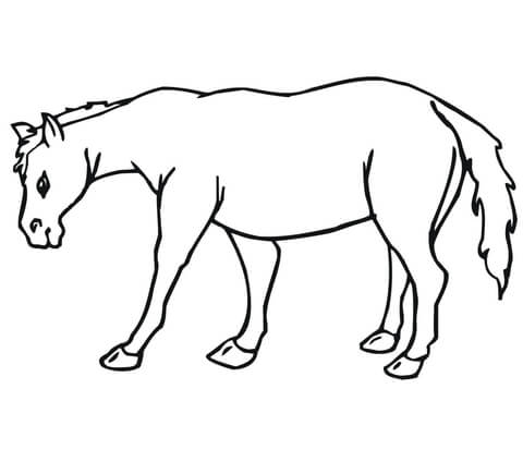 480x435 Mule Coloring Page Free Printable Coloring Pages