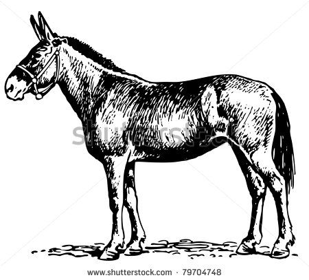 450x407 77 Best Mule Drawing Ideas Images On Donkey, Horses