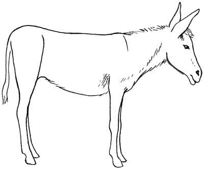400x332 Donkey5.jpg