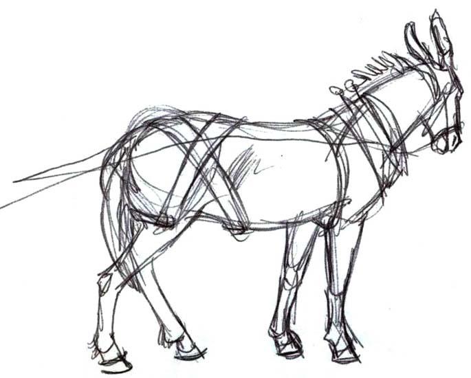 685x550 Mule Sketch Camp