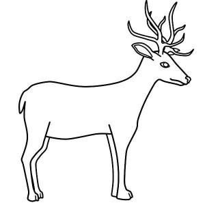 300x300 Couple Of North America Mule Deer Coloring Page Coloring Sun