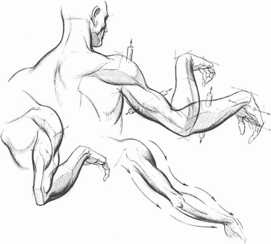 1104x996 Arm Muscle Hand Research Arm Muscles, Drawings