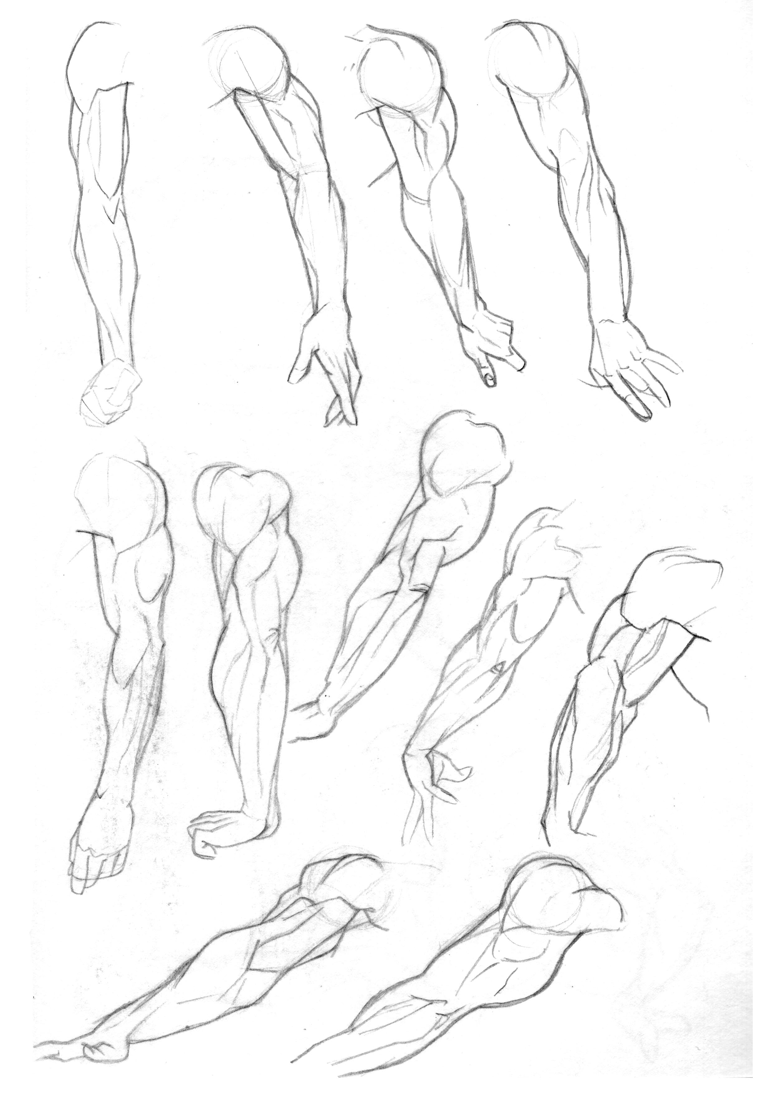 2480x3508 More From The Early Days. Tried Focussing On Triceps And The Back