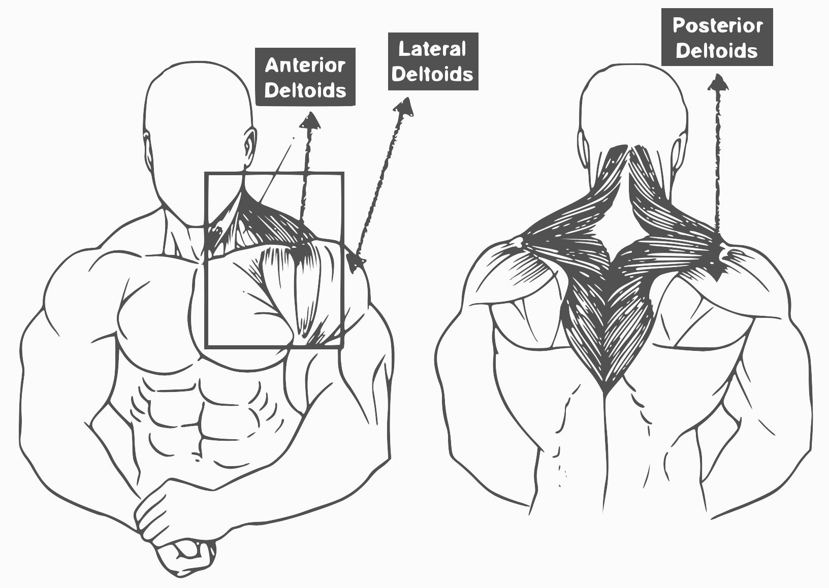 1632x1158 Shoulder Workouts 10 Best Shoulder Exercise For Muscle
