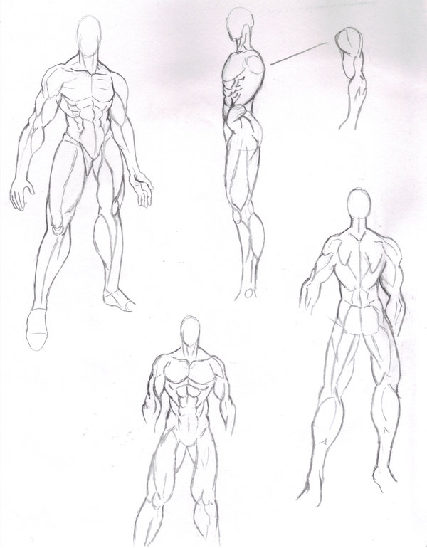 Muscle Body Drawing at GetDrawings.com | Free for personal use ...