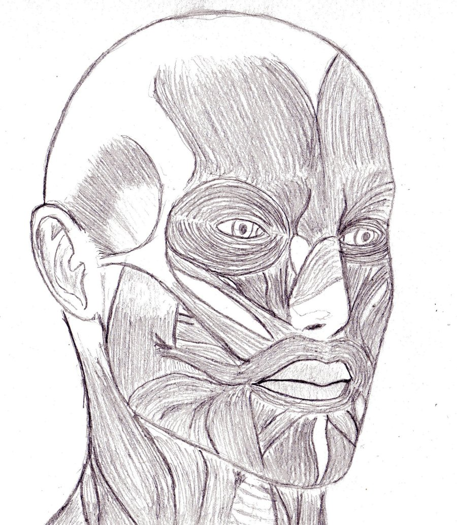 900x1034 Face muscle by killspring on DeviantArt