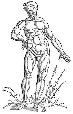 236x367 Muscular Drawing Art