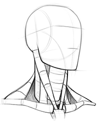 200x250 How To Draw Neck Muscles Form Proko