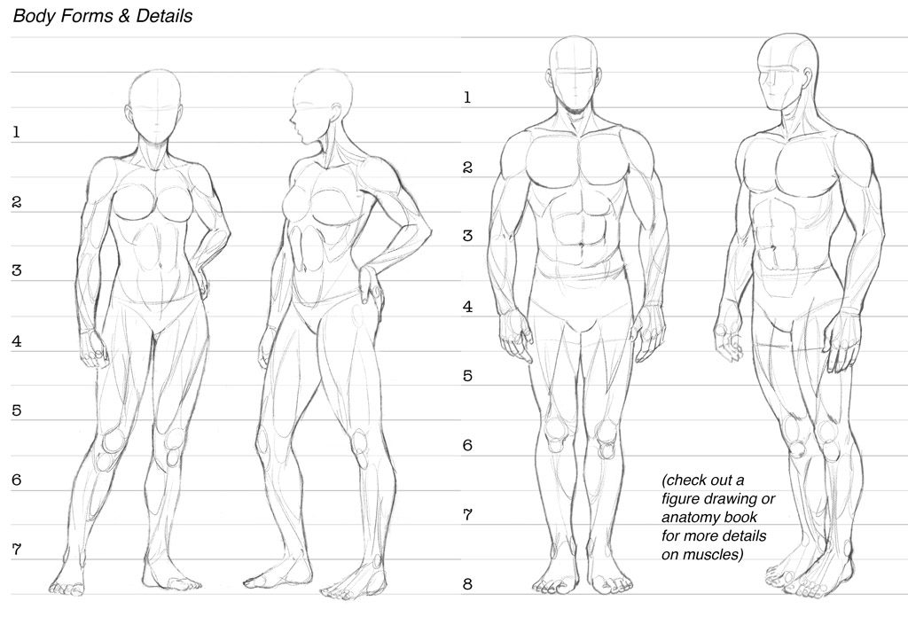 This is an image of Gratifying Body Form Drawing