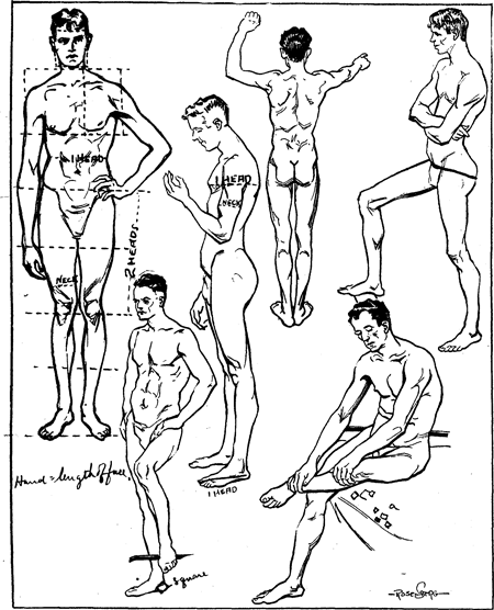 450x556 Proportions Amp Measurements Of Human Body Including Men, Women