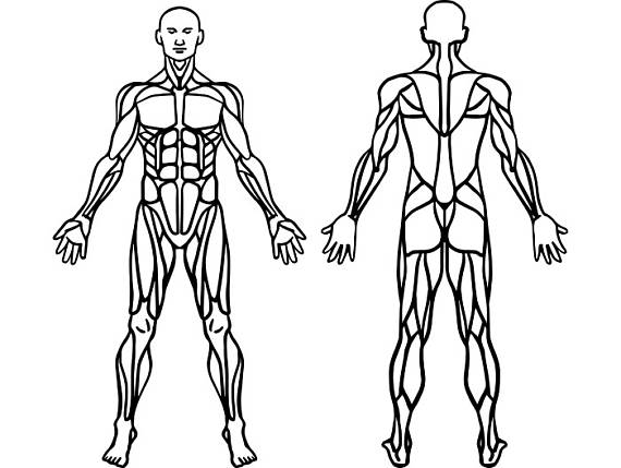 muscular system drawing at getdrawings com free for chicken clip art free black and white chicken clip art free svg