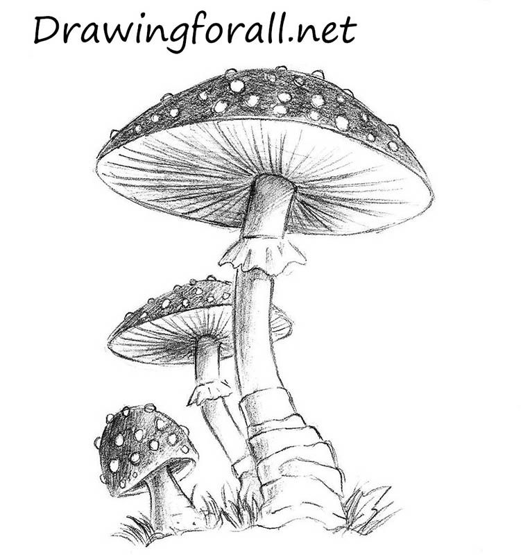 751x800 How To Draw A Mushroom Mushrooms