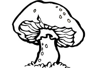 336x237 Download Free Mushroom Drawing
