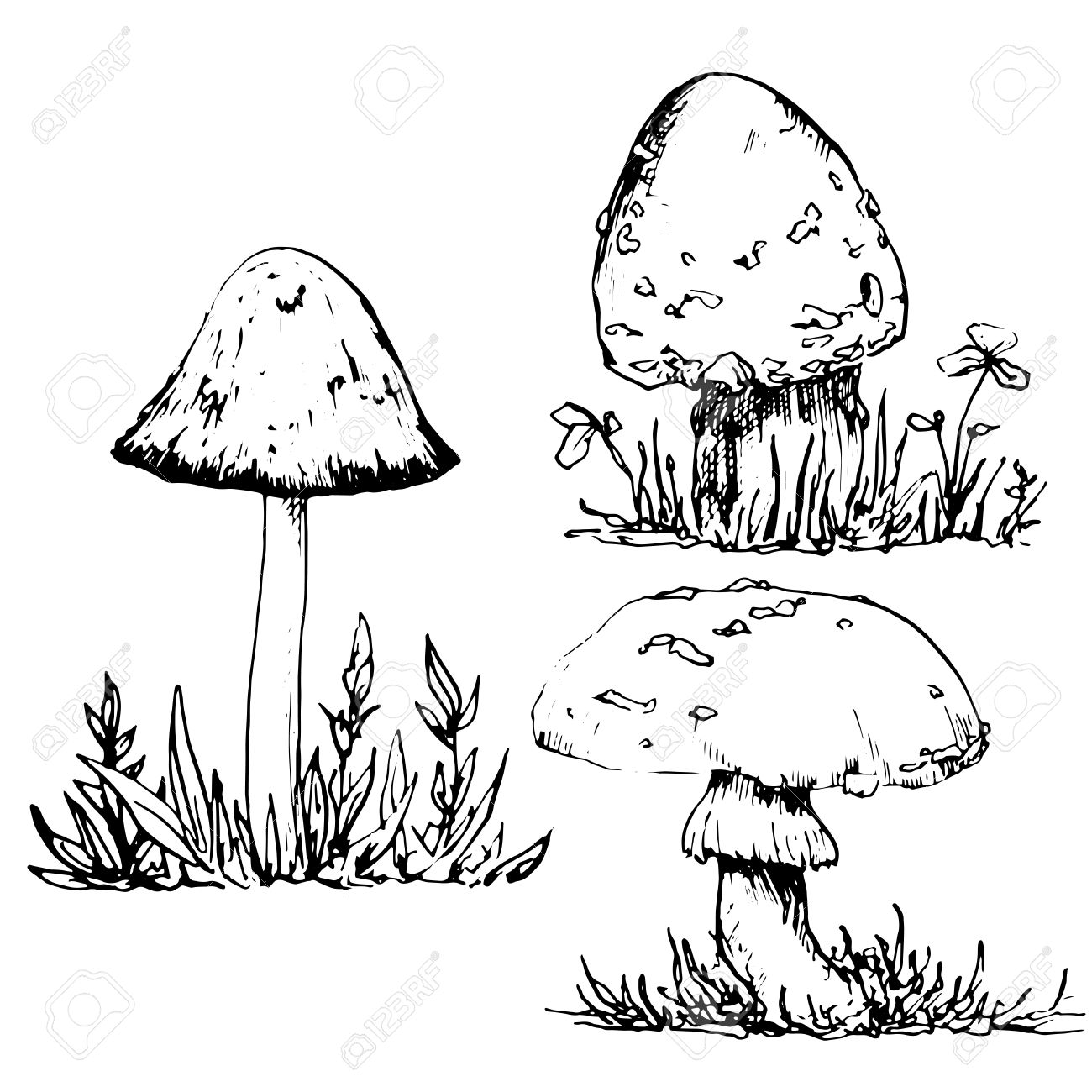 1300x1300 Poisonous Mushrooms At Grass, Ink Pen Drawing Set, Vintage Style