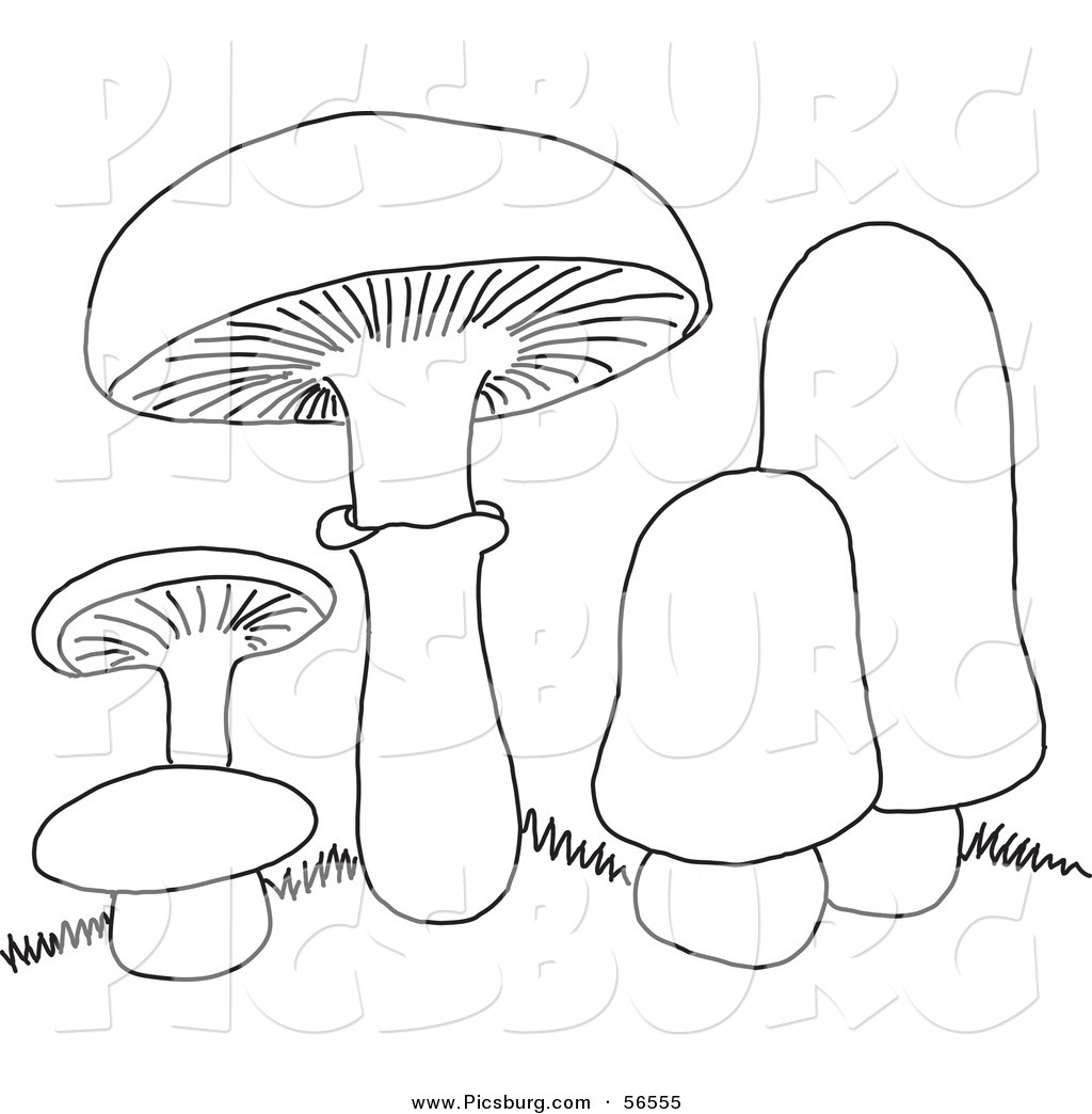 1024x1044 Clip Art Of A Coloring Page Of Mushrooms By Picsburg