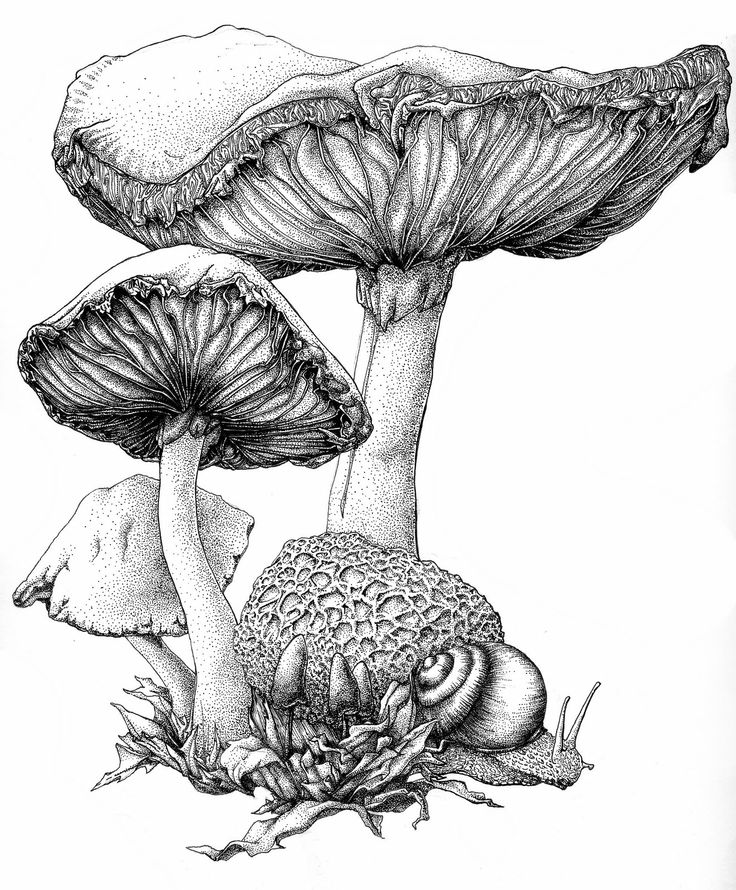 736x890 Scientific Illustration Drawing, Illustration, Amp Printmaking