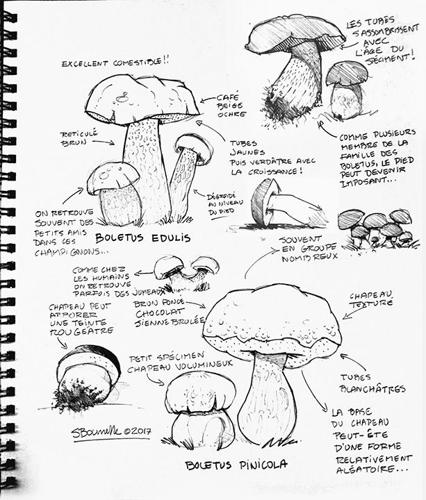 Mushrooms Drawing
