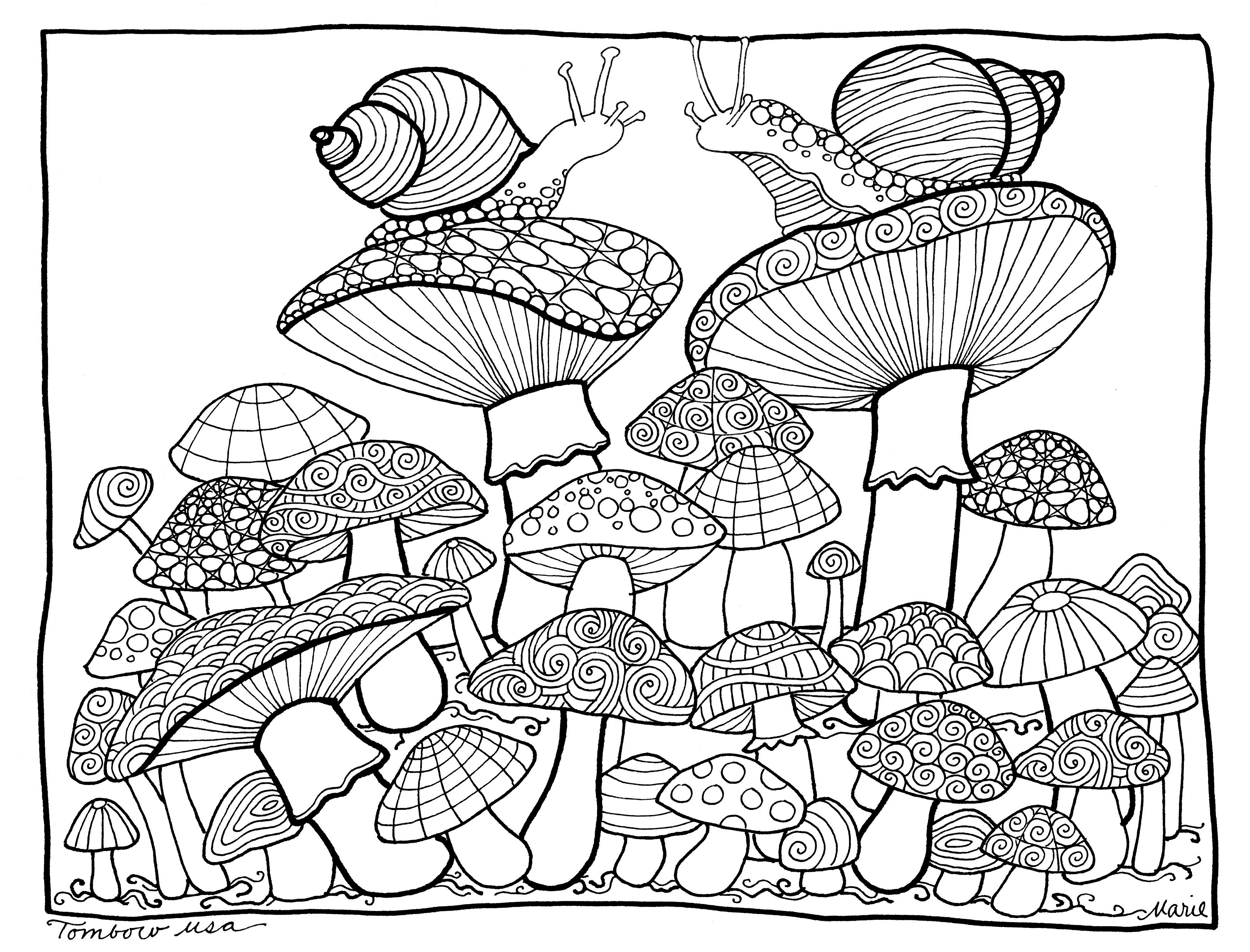 4270x3253 Mushroom Coloring Page Illustrated By Marie Browning