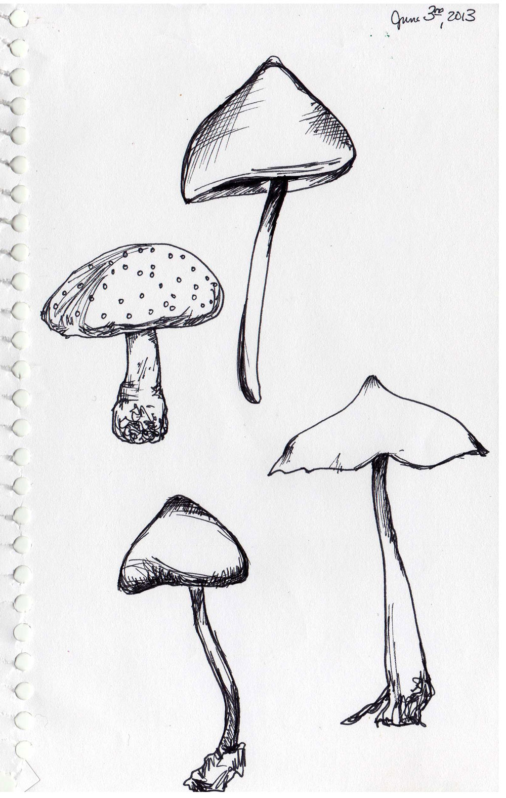 1000x1576 Sketchbook By Kendra Shedenhelm So Many Mushrooms