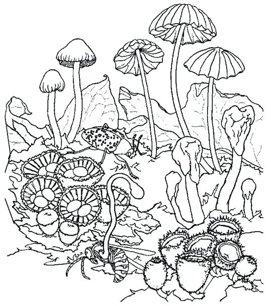 539x609 Trippy Mushroom Coloring Pages Mushrooms Coloring Pages
