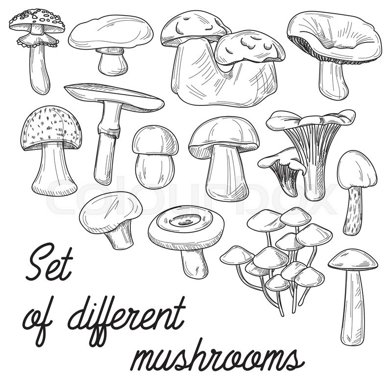 800x800 Vignette With Mushrooms For Application In The Book Drawing
