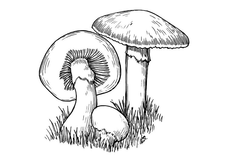 750x531 Coloring Page Mushrooms