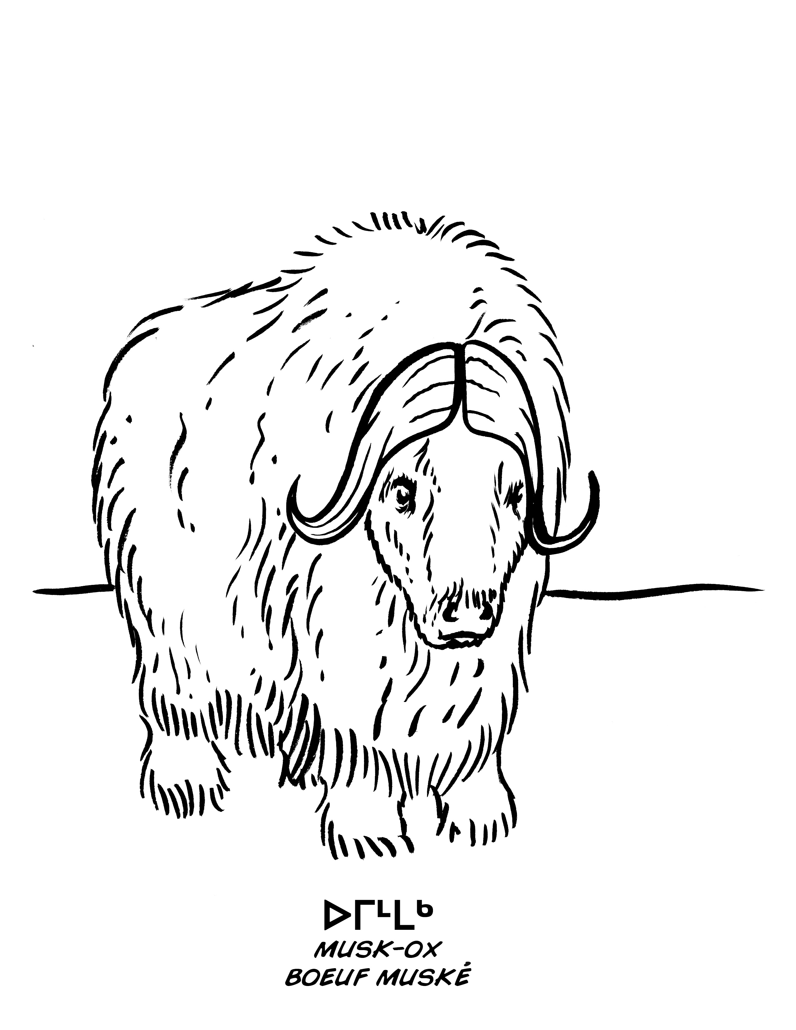 Musk Ox Drawing at GetDrawings.com | Free for personal use Musk Ox ...