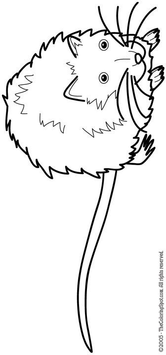 336x720 Muskrat Audio Stories For Kids Amp Free Coloring Pages From Light