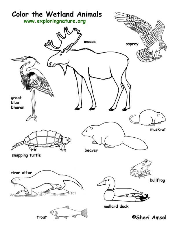 612x792 Excellent Resource For Biology School Stuff Animal
