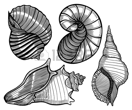 Mussel Drawing