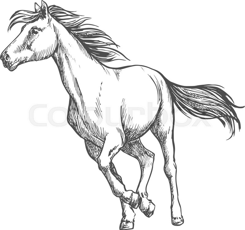 800x750 White Horse Running Freely. Wild Mustang Stallion Gallops Against