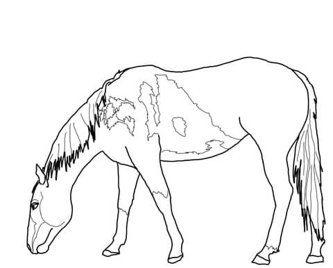 480x386 Grazing Mustang Coloring Page Free Printable Coloring Pages