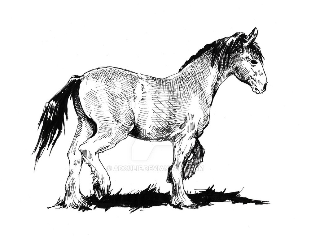 1004x795 Just A Horse Drawing By Adoulie